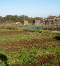 A picture of our allotments